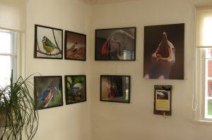 Några av Bengts bilder