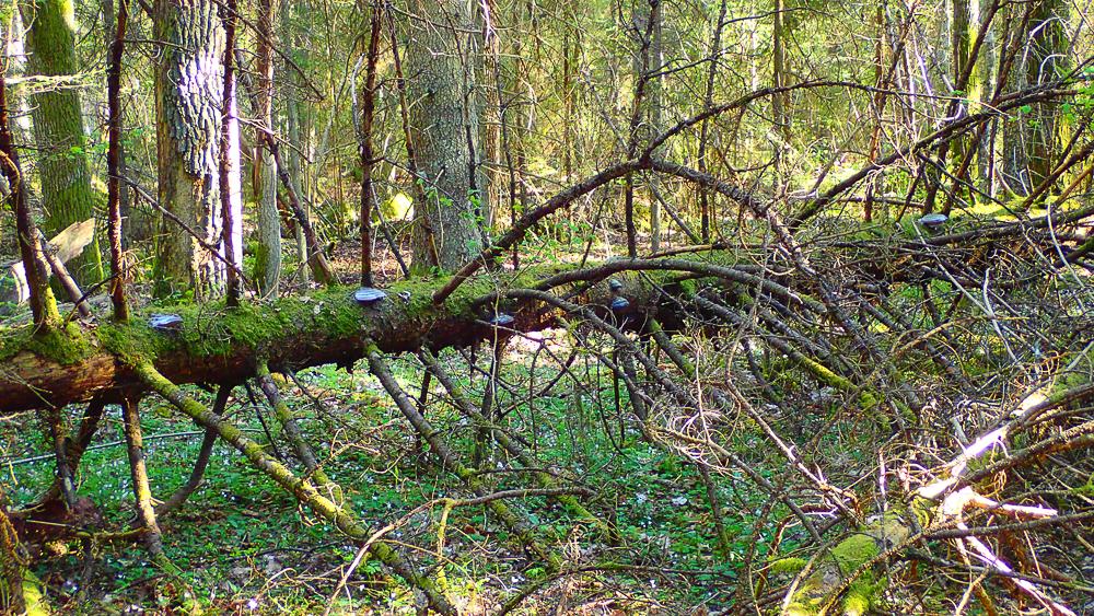 Knästorps naturreservat
