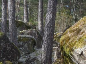 Gammelskog vid Stensjöbäcken